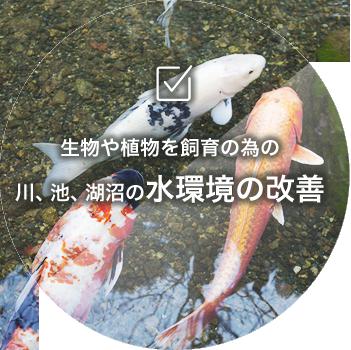 生物や植物を飼育の為の川や堀川の水質環境の改善