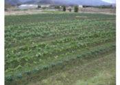 バイオトップサンドを活用した実験農場