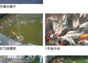 公園池の水質浄化対策