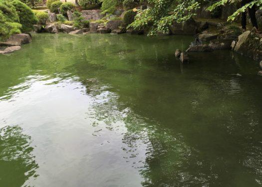 寺社庭園内の池の水質改善対策
